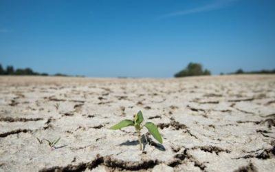Climate change: Last decade 'on course' to be warmest