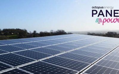 Octopus launches new Panel Power tariffs for businesses with solar